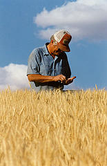 wheat-farmer