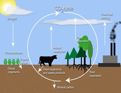 carbon_storage_diagram